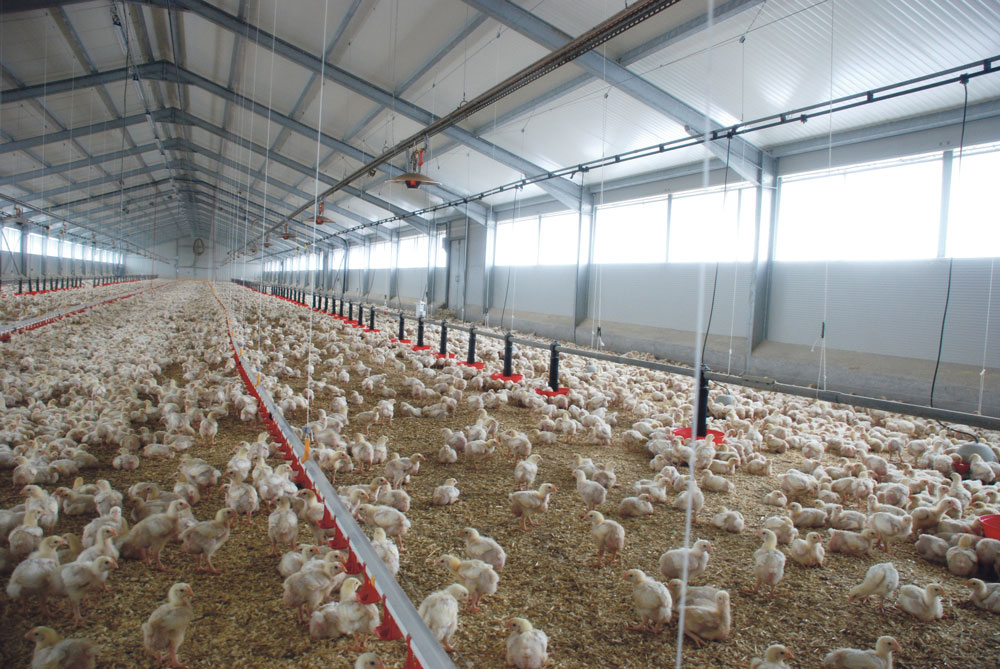 aviculture-poulet-volaille-chair-production-consommation-export-journee-chambre-agriculture-bretagne-crecom