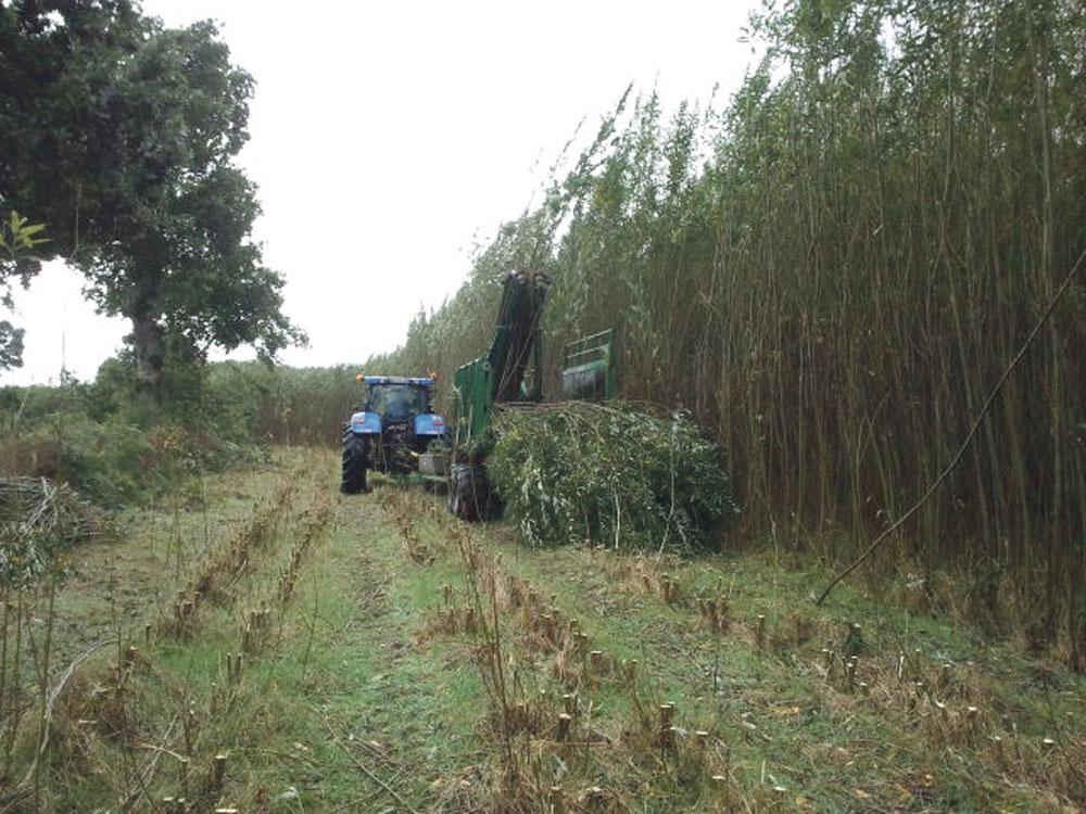 Photo of Les Cuma se lancent dans la récolte de saules