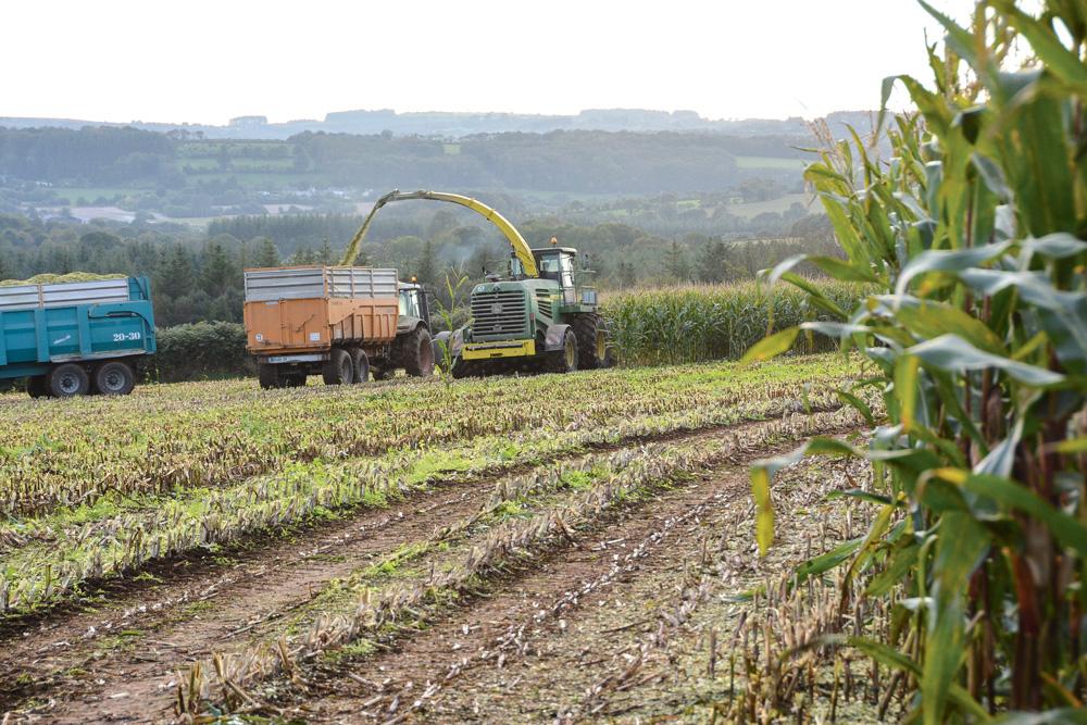 Photo of Comment valoriser au mieux son maïs ensilage 2014 ?