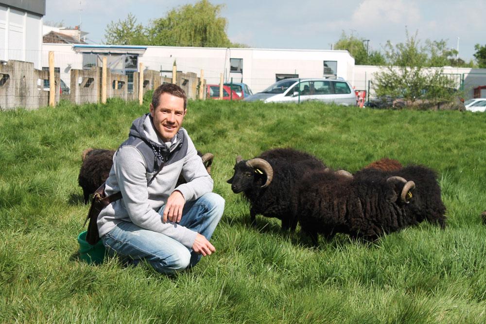 Environnement des moutons d 39 ouessant pour l 39 entretien de for Responsable des espaces verts
