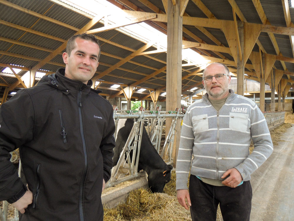 vache-triskalia-production-laitiere