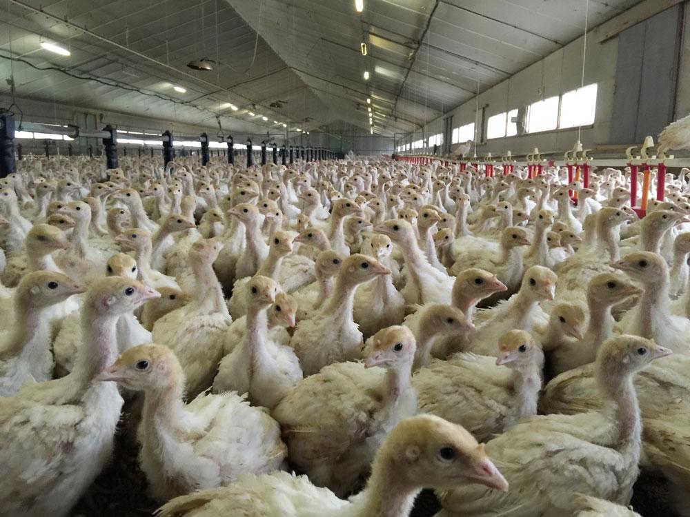 Photo of Aviculture : La France championne de la productivité
