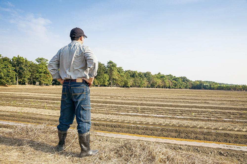 agriculteur-celibat