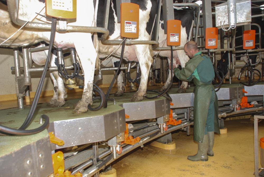 Photo of La main-d'œuvre familiale sous-estimée en élevage de lait
