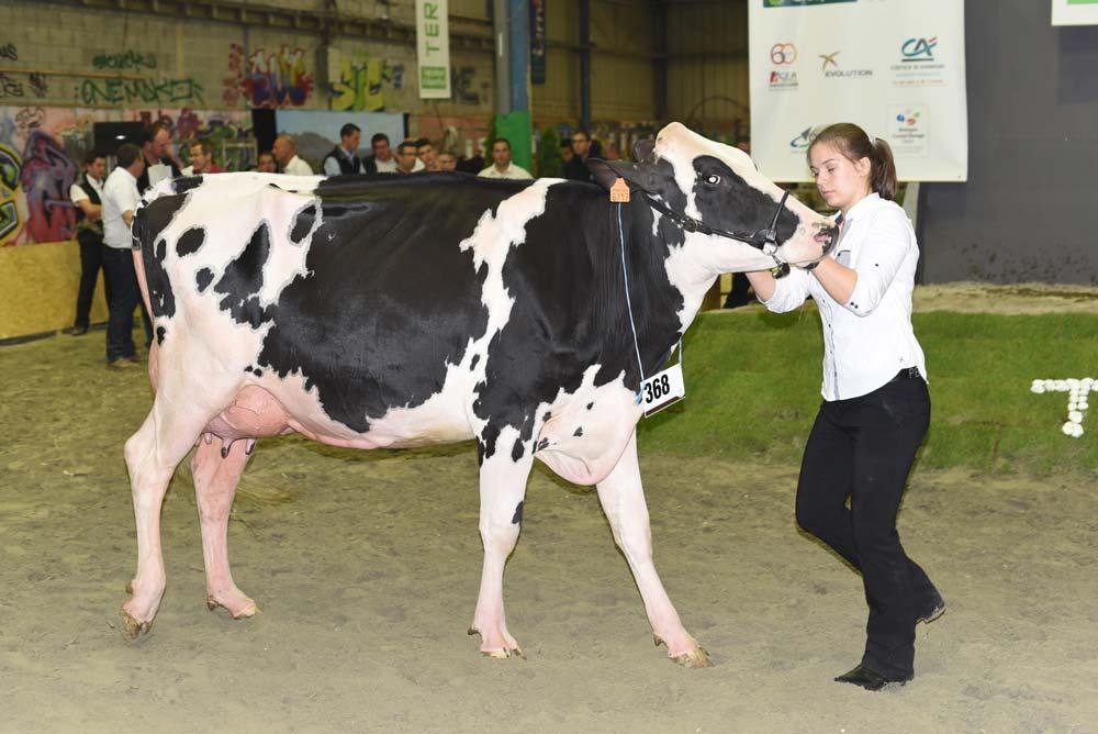 Photo of Concours des races laitières aux Terralies