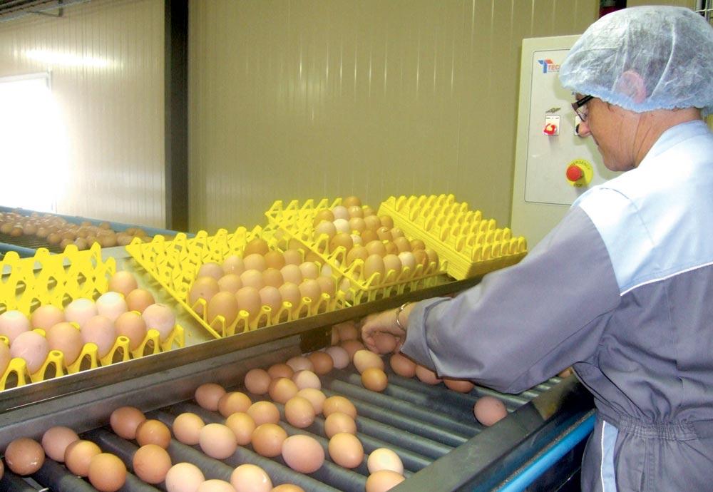 Photo of Oeufs contaminés : un nouvel insecticide recherché dans les élevages français