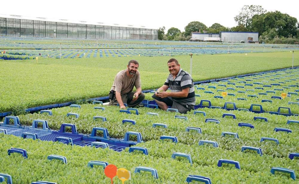 Ronan Le Mentec et Éric Guillou, chefs de culture chez Thomas Plants sur la plate-forme extérieure de 6 ha couverte de plants de choux prêts à être livrés chez les producteurs.