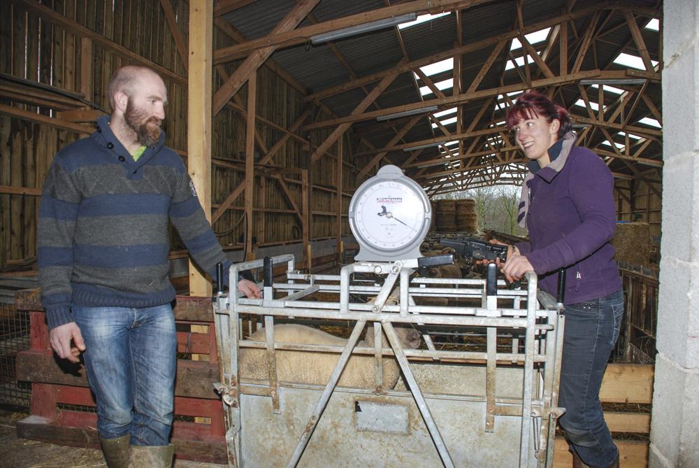Photo of Choisir ses agnelles avec des pesées