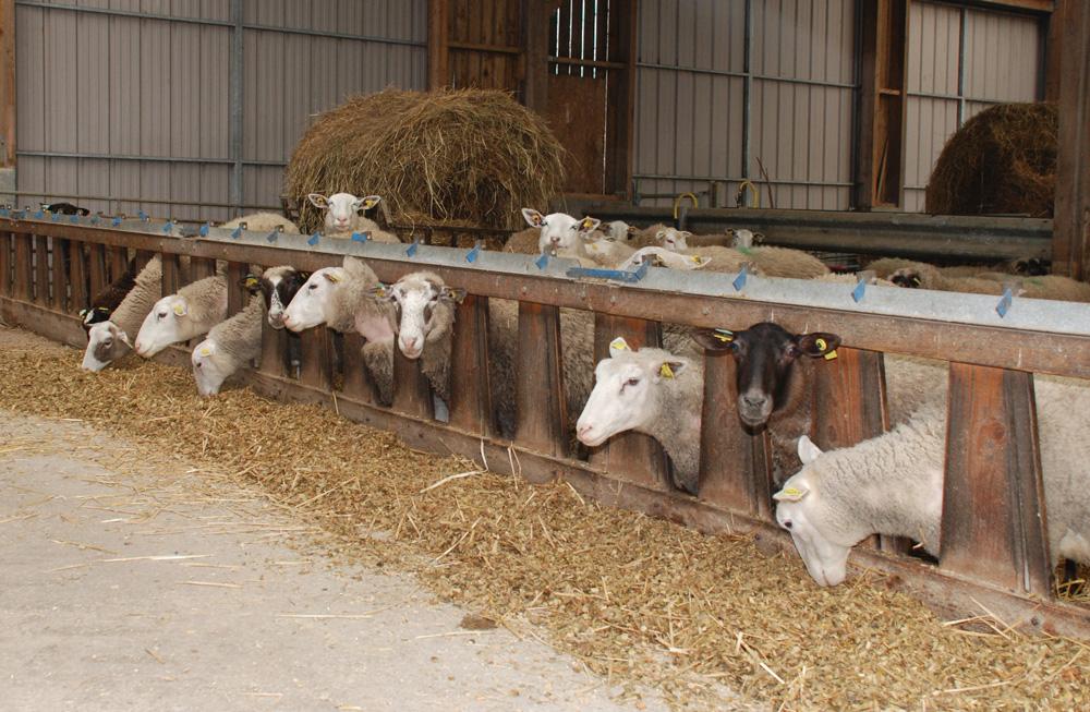 Photo of Demande des aides PAC ovines avant le 2 février
