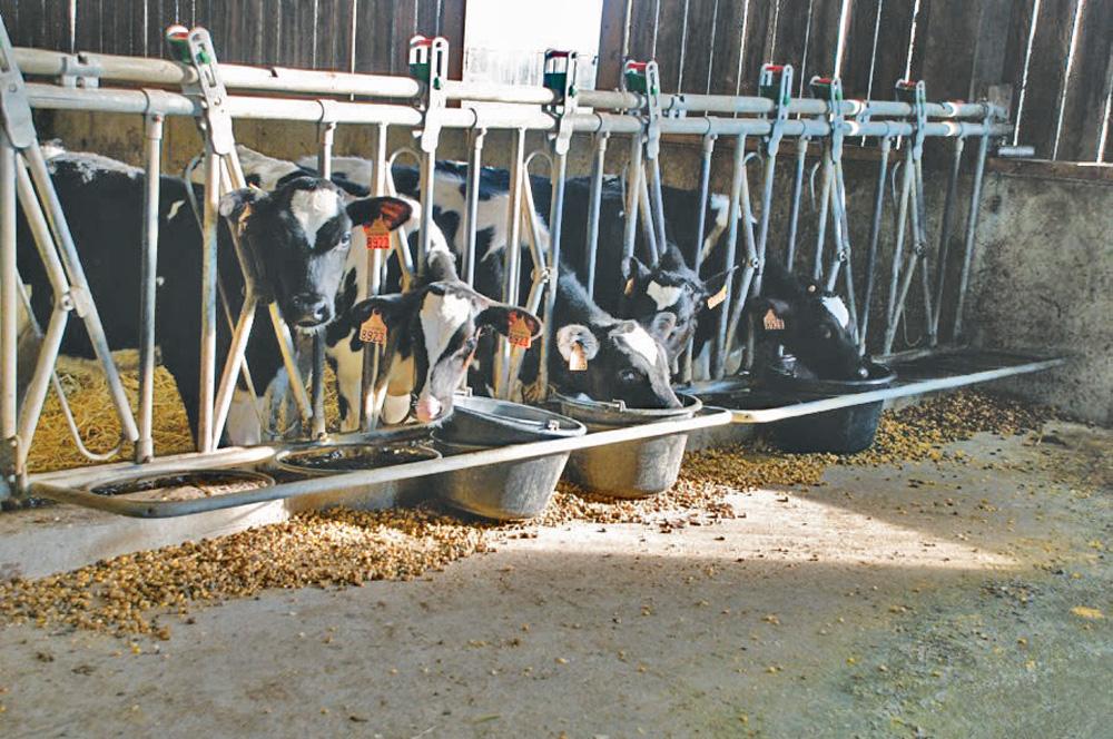 Photo of Amelis organise des rencontres sur l'élevage des génisses