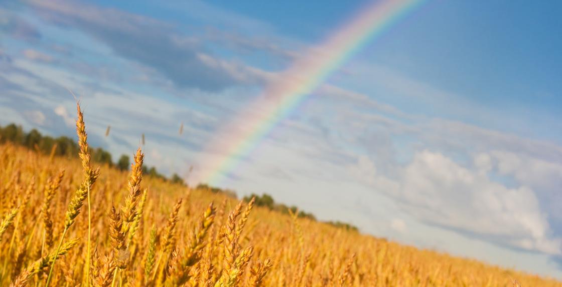 Photo of Réchauffement climatique : l'agriculture doit jouer un rôle selon l'Inra