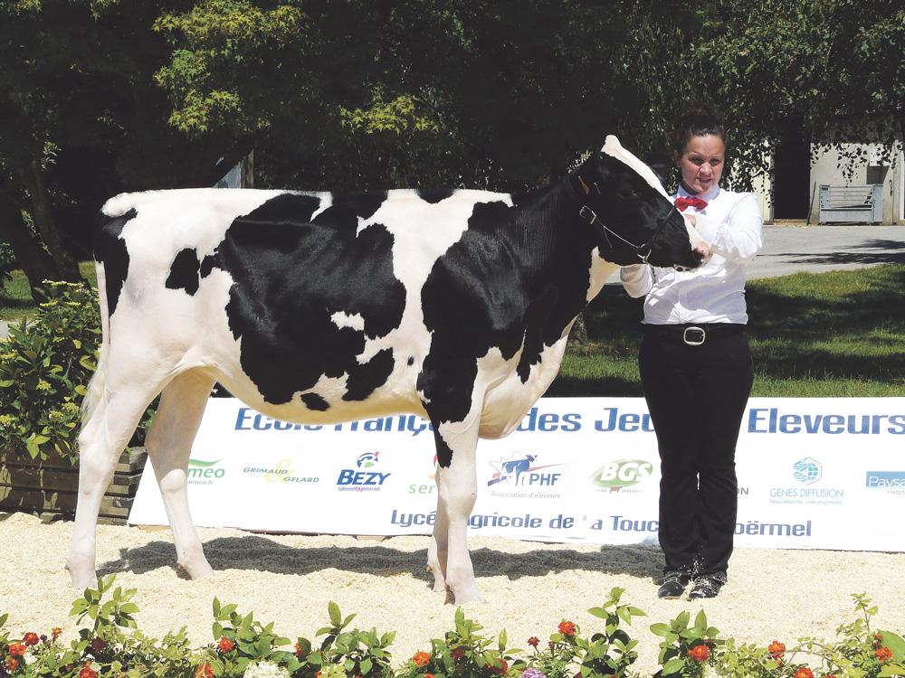 Photo of Le Show génisses réunit  38 éleveurs à Grand-Champ