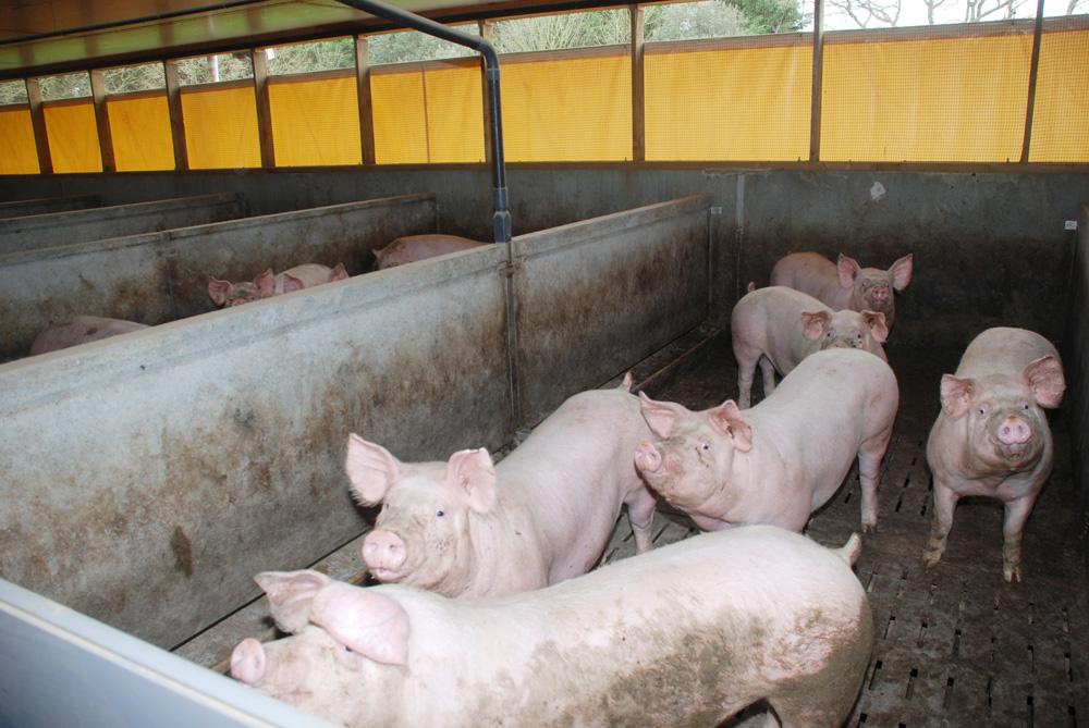 Photo of Des revenus disparates en porc en 2014