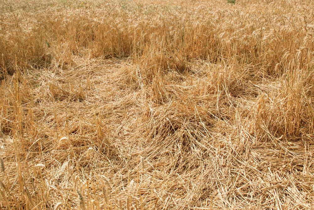 environnement-presqu-ile-rhuys-agriculteurs-boues-dechets-verts