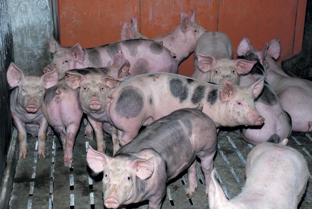 Photo of La Russie espère vendre de la volaille et du porc en Chine