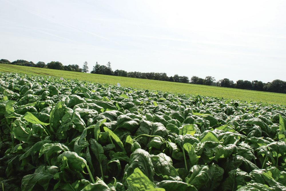 Photo of Les légumes industrie en difficulté