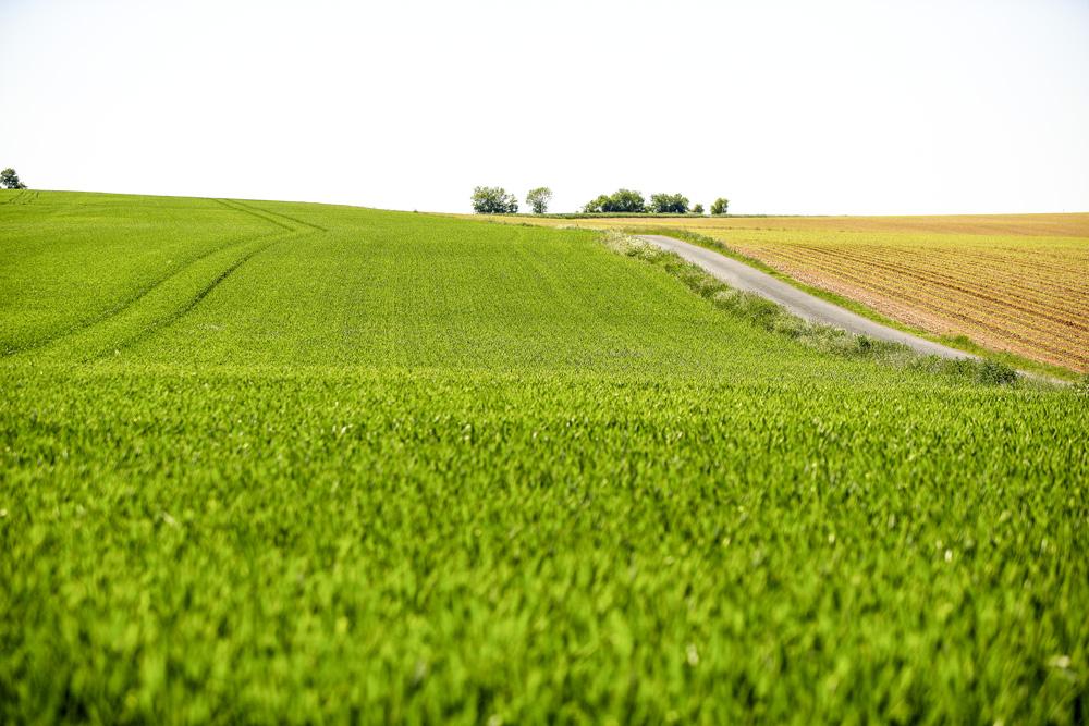 Photo of Les paiements 2018 des MAEC et des aides à l'agriculture bio ont commencé