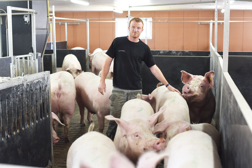 Photo of Le défi de l'installation en porc