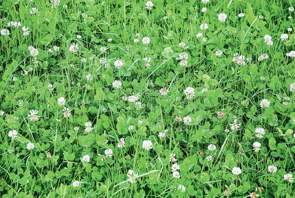 Photo of Ray-grass : le bon mélange limite les frais