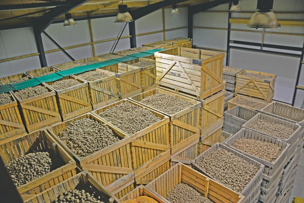 pomme de terre un b timent neuf pour le plant journal paysan breton. Black Bedroom Furniture Sets. Home Design Ideas