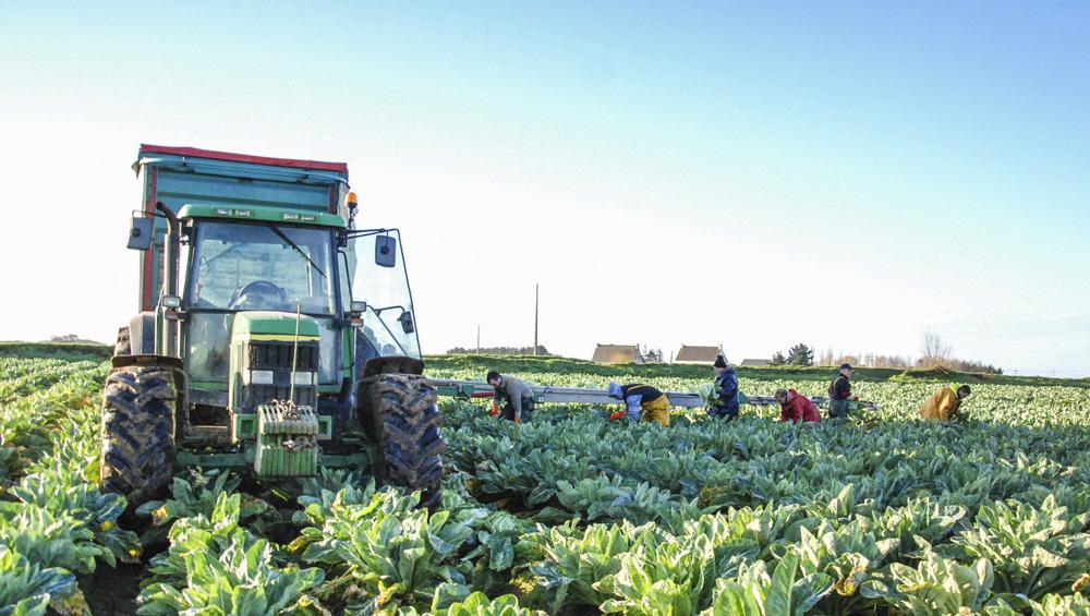 Photo of Chou-fleur : Le réseau breton fait le plein de nouvelles variétés
