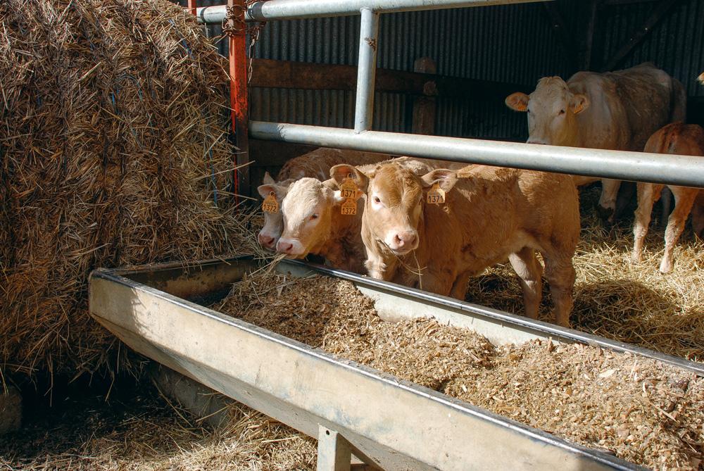 Photo of Viande bovine : l'Italie moins friande des broutards français
