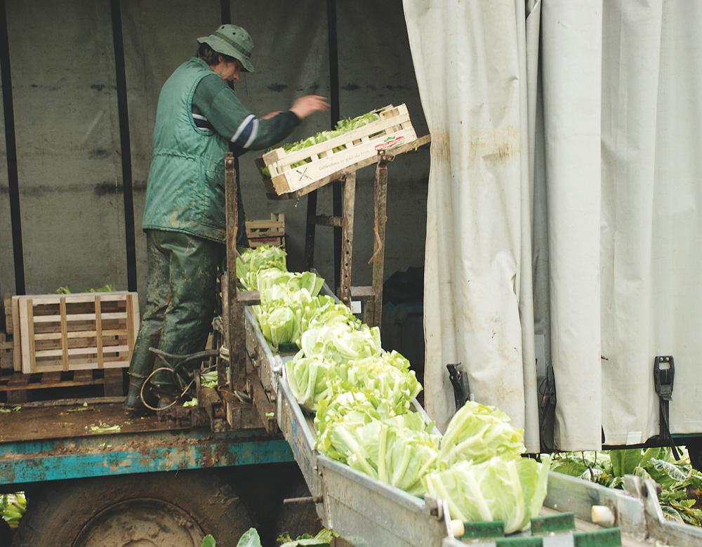 aide-secteur-legumier
