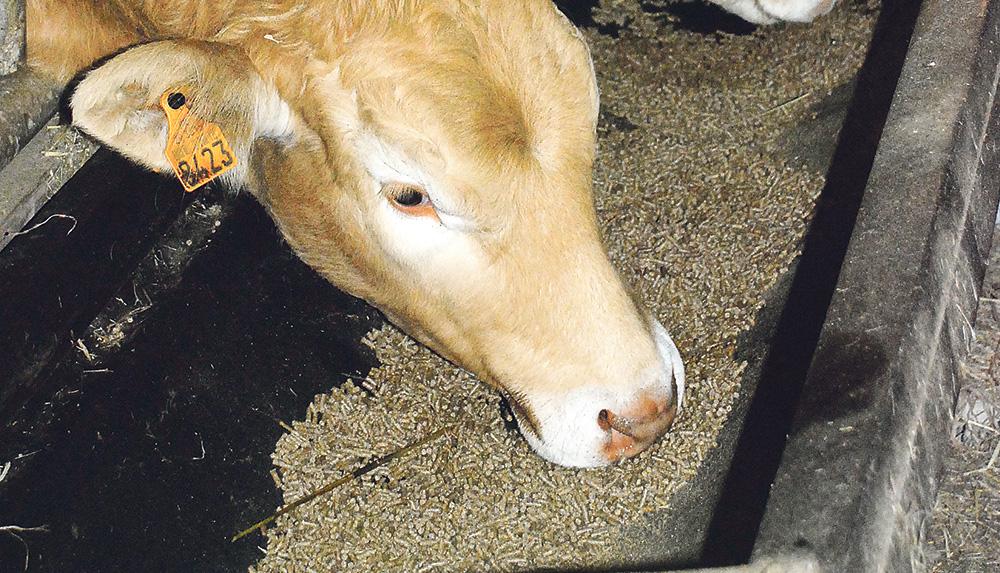 Photo of Les ventes d'aliments bovins dépassent celles de porc en France