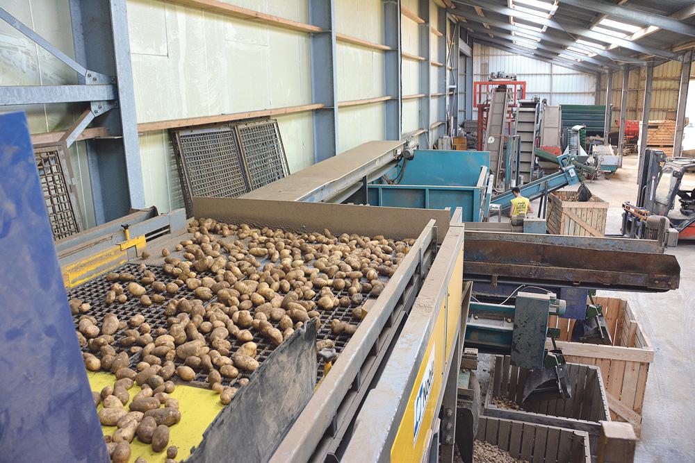 Photo of Pommes de terre : calibrer à la récolte pour gagner en qualité