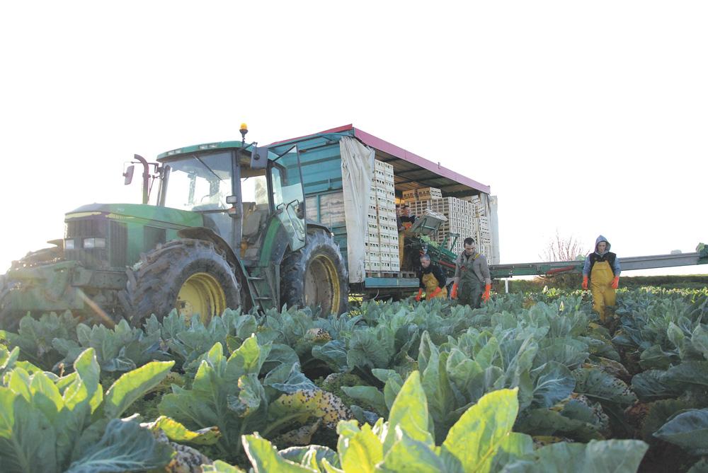 Photo of Fruits et légumes : suspension des mesures d'urgence