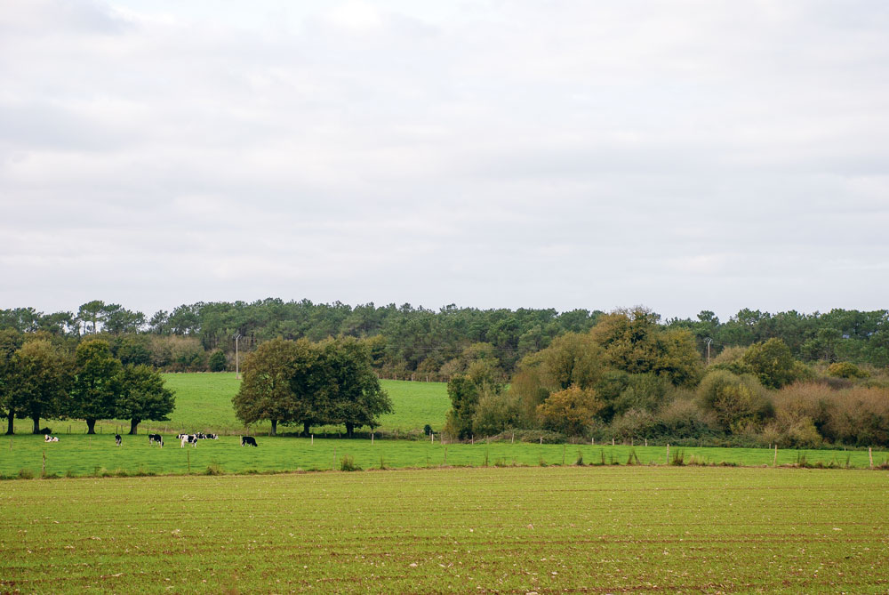 foncier-propriete-agricole