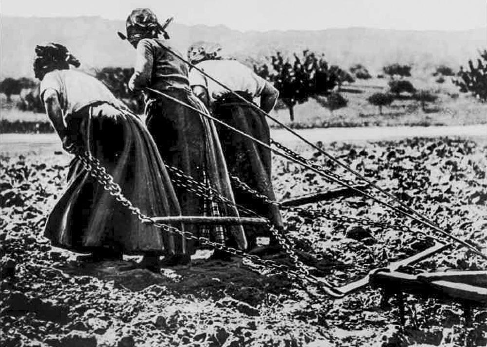 Dans les champs, les femmes ont pris la place des hommes