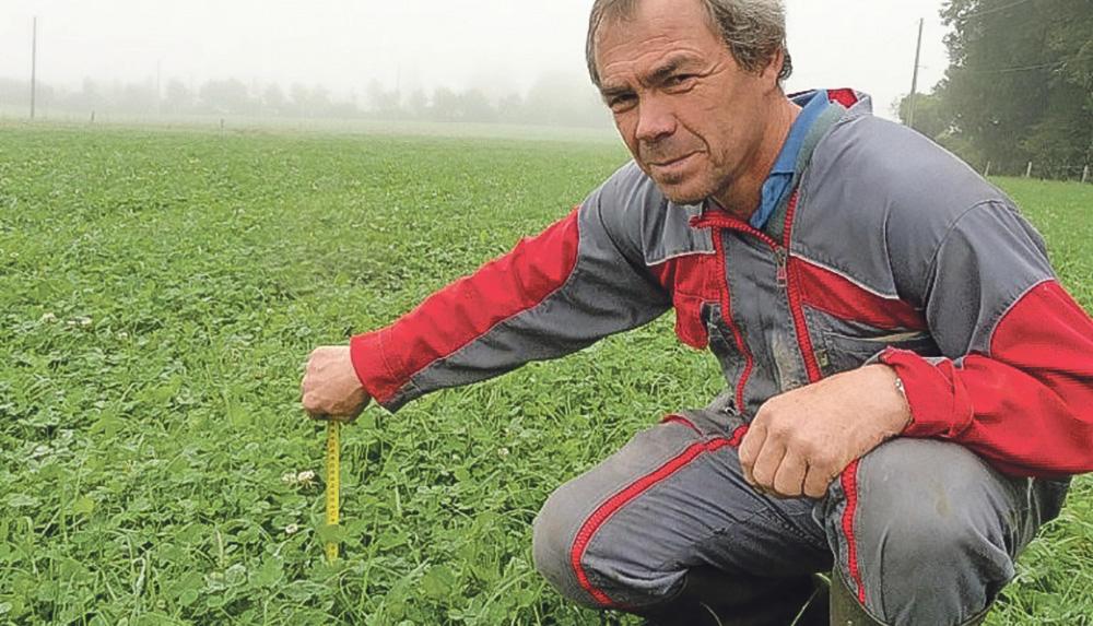 Photo of Optimiser les valeurs alimentaires de l'herbe d'automne
