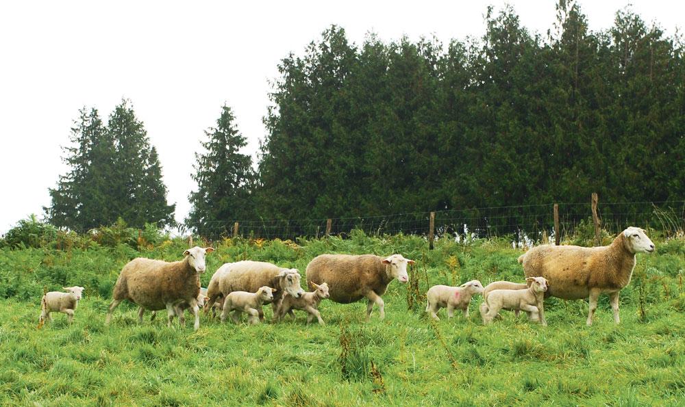Photo of La Fédération nationale de défense du pastoralisme bientôt lancée