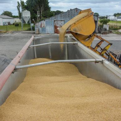 Mauvaise récolte : «la solution passe par les semences de ferme»