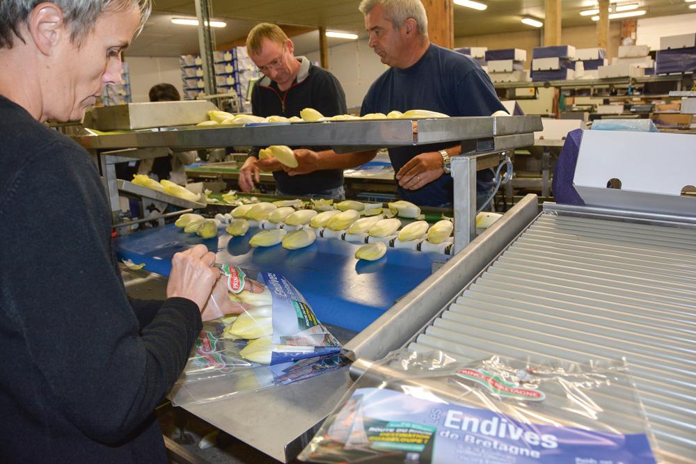 Photo of Les endives jouent la carte du packaging