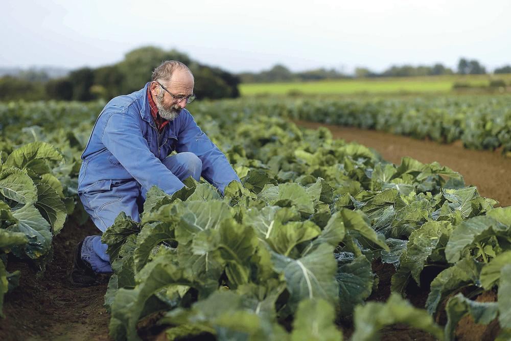 pierre-bihan-poudec-producteur-legume-evolution-agricole