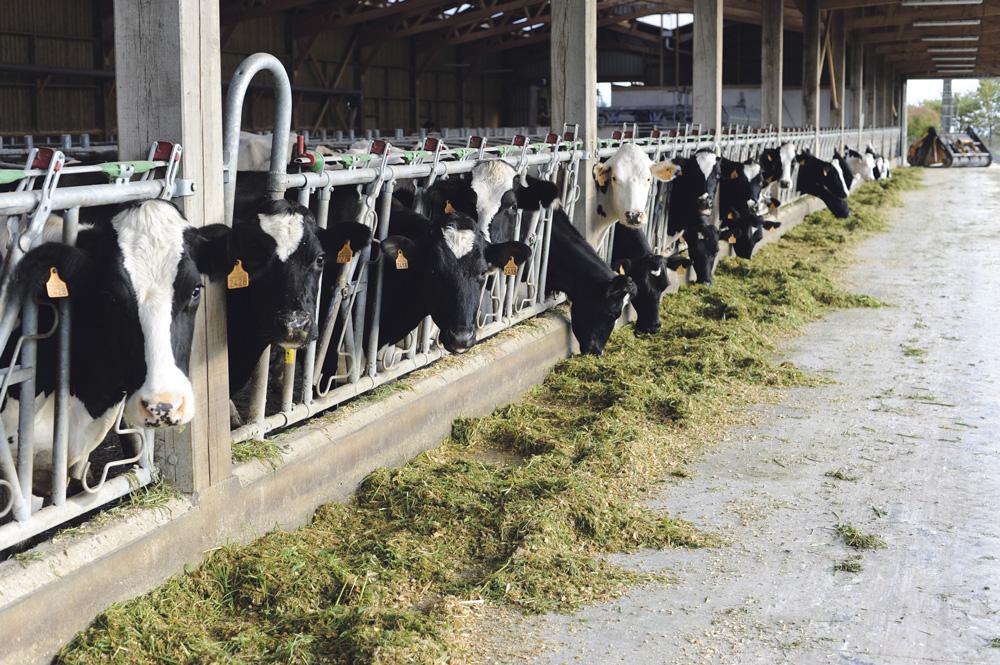 Photo of La Bretagne précise son Plan lait 2020