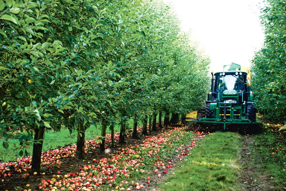 Photo of 2014, l'année de l'alternance en pommes à cidre
