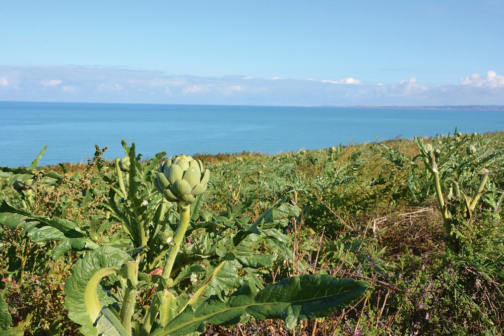 Photo of Le climat commande les producteurs de légumes