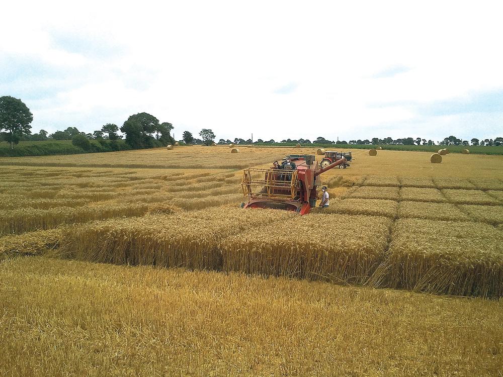 Photo of Blé / triticale : De belles céréales du semis aux récoltes