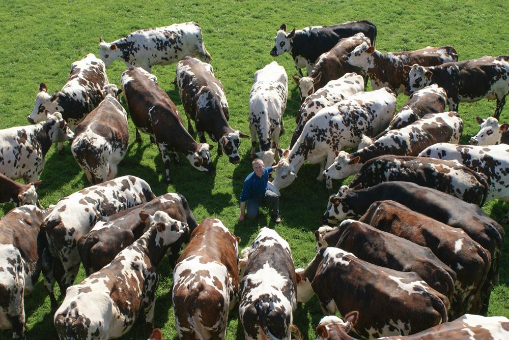 Photo of Vente totale d'un troupeau normand dans le Calvados