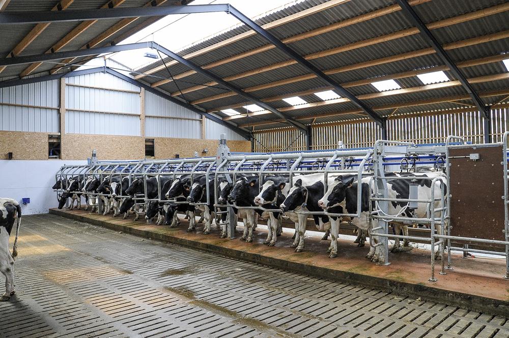vache-lait-apres-quotas-main-oeuvre