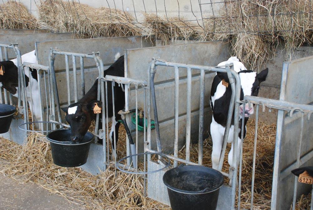 Photo of Bien choisir sa poudre de lait