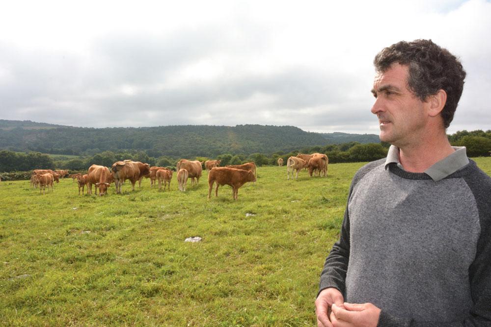bretagne-viande-bio-bovine