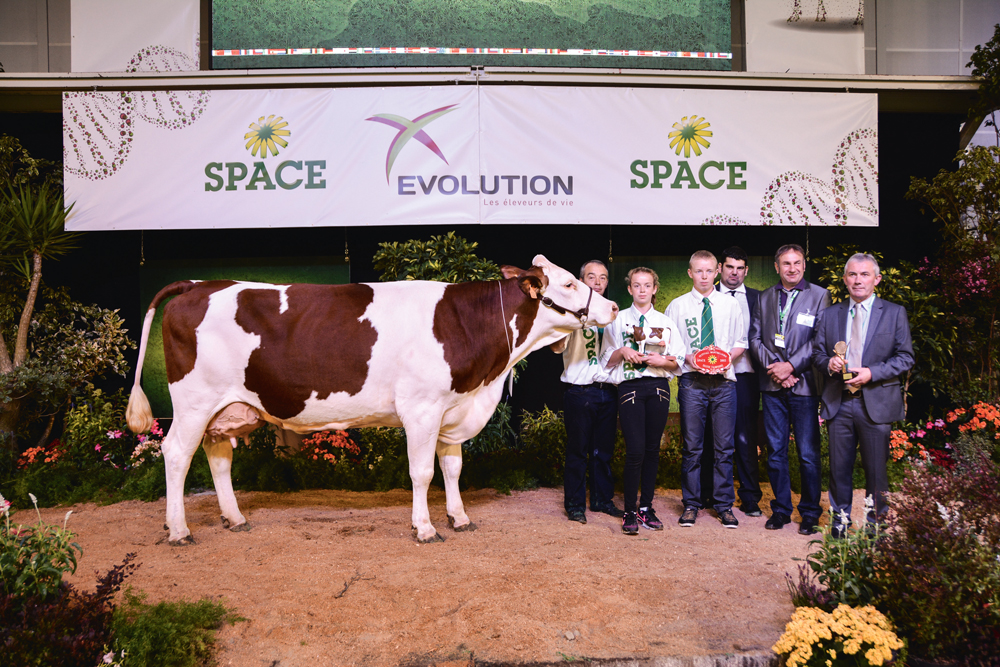 concours-bovin-space-2015-montbeliarde