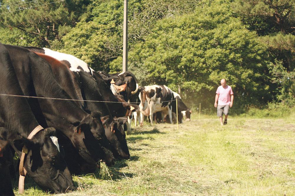 fauchage-herbe-repousse-exploitation-laitiere