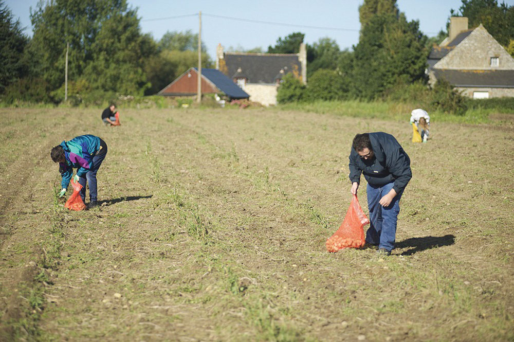 glanage-solidaire-fruit-legume-non-recolte-agriculteur-social