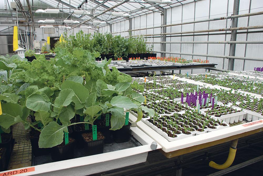 innovation-vegetale