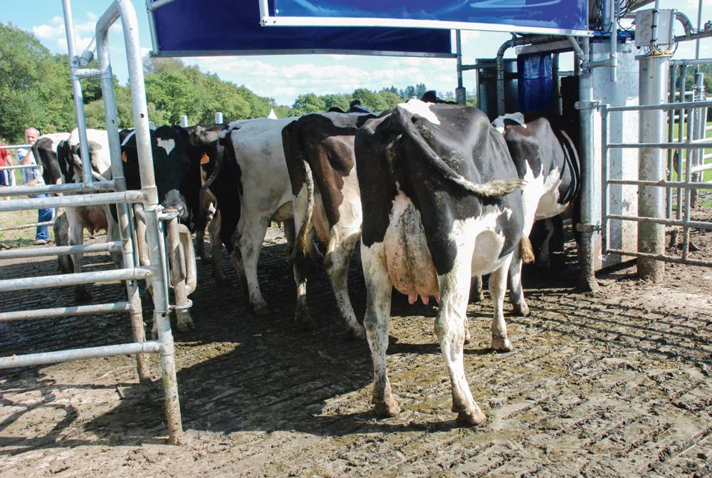 robot-traite-lait-vache-trevarez